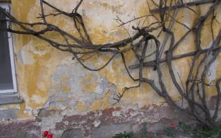 Feuchte Wände